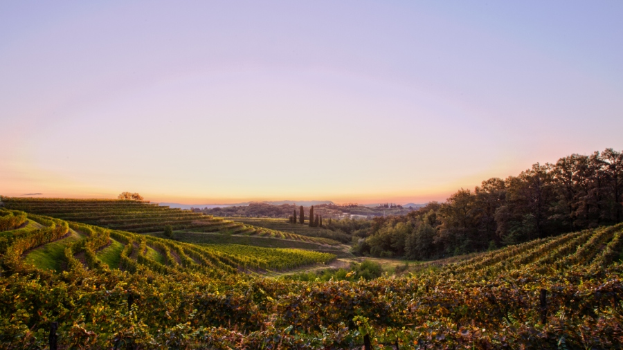 Collio Wine Region