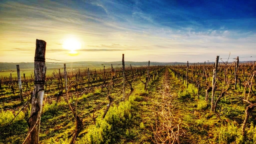 North Istria Wine Region