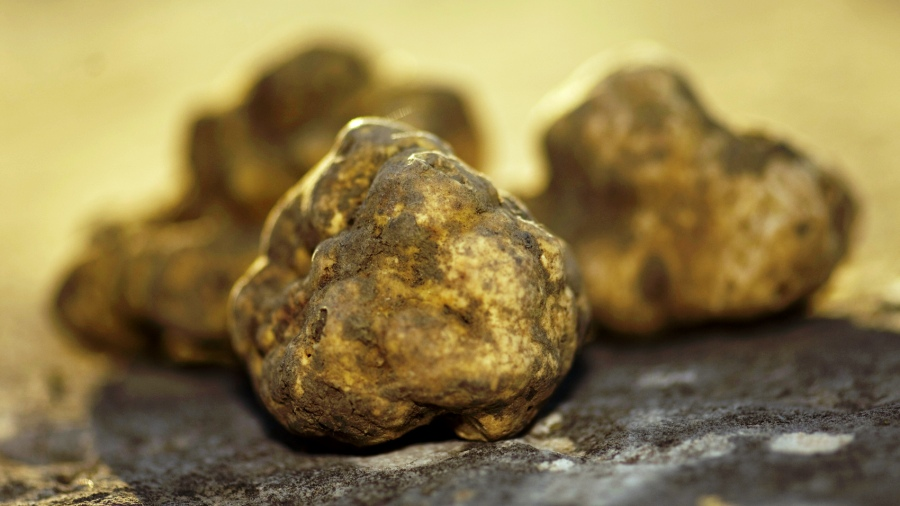 The New York Times Article On Truffles in Istria